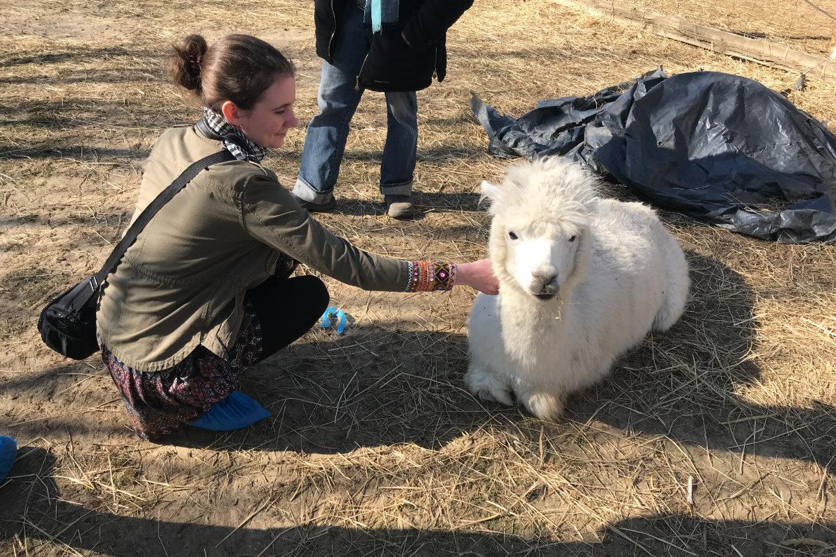 Látogatóban egy alpaka farmon | Égikert