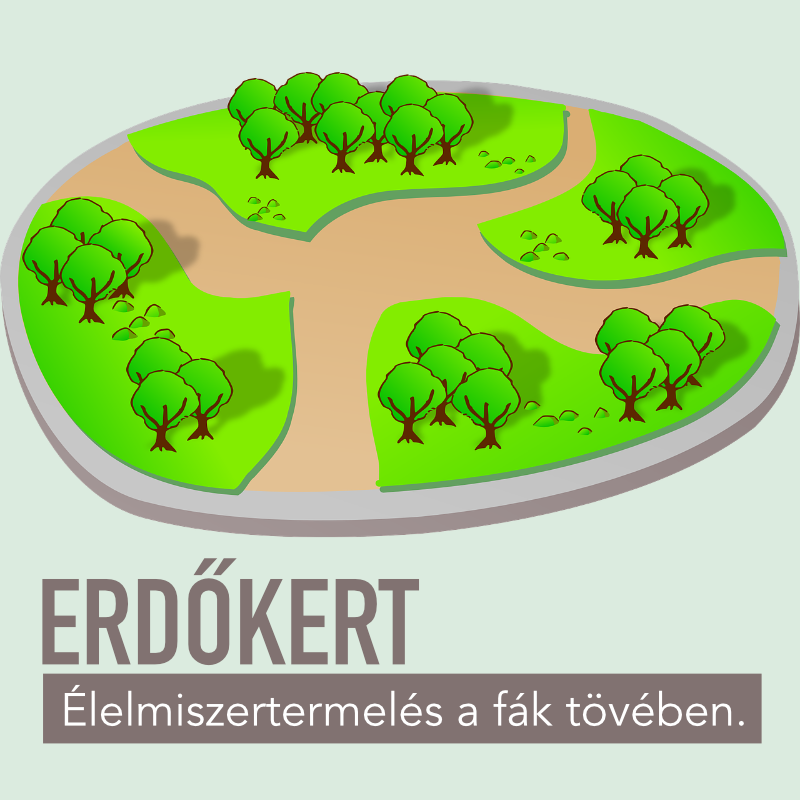 Erdőkert | Égikert